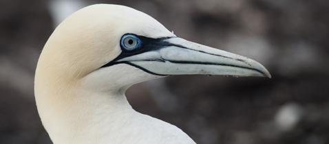 Scottish Seabird Centre 3